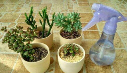 浇花酸性水制作图片